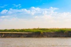 Bulrush на реке Irrawaddy, Мандалае, Мьянме, Бирме Скопируйте космос для текста стоковые изображения rf