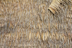 Bulrush wall. Royalty Free Stock Image