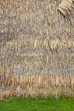 Bulrush wall. Stock Photo