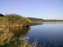 Bulrush and water Royalty Free Stock Photography