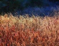 Bulrushes и cattails в малом болоте стоковые изображения rf
