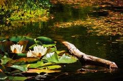 2 bulrushes in een stroom Royalty-vrije Stock Foto's