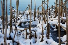 Bulrushes Snowy Стоковые Изображения