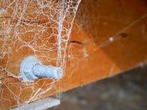 Bult och mutter som täckas med spiderweb royaltyfri bild