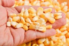 Bulto de textura amarilla de los granos del maíz fotos de archivo