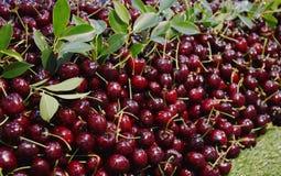 Bulto rojo de la cereza para la venta en mercado imagen de archivo