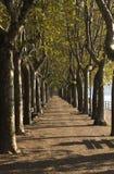 bulwarów drzewa Obrazy Royalty Free