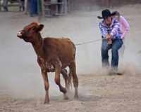 Bum Steer Stock Images