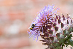 Bumble bee collecting pollen on a plant Royalty Free Stock Photos