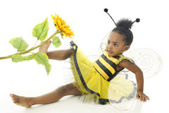 Bumble Bee Down. An adorable two year old wearing a bumble bee outfit with wings, sitting on the floor happily pushing a sunflower with her foot.  On a white Royalty Free Stock Images
