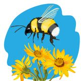 Bumble bee flying over yellow flowers on background of sky. Bumble bee flying over yellow flowers on background of blue sky vector illustration. Realistic male Royalty Free Stock Photo