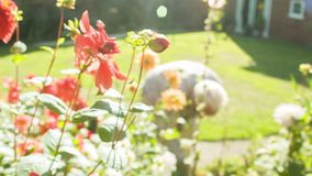 Bumble bee in a garden stock footage