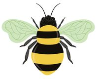 Bumble Bee Isolated on White Background. Vector Illustration of Bumble Bee close up isolated on white background Royalty Free Stock Images