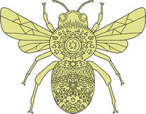 Bumble Bee Mandala. Mandala style illustration of a bumblebee or bumble bee, a member of the genus Bombus, part of Apidae, one of the bee families set on royalty free illustration