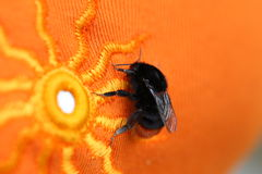 Bumble bee sitting on a bright orange cloth with sun pattern Stock Images