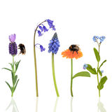 Bumble Bees and Flowers Royalty Free Stock Images
