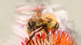 Bumblebee λουλούδι επικονίασης κοντά επάνω Στοκ Εικόνες