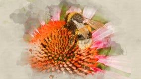 Bumblebee λουλούδι επικονίασης κοντά επάνω Στοκ εικόνες με δικαίωμα ελεύθερης χρήσης