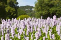 bumblebee λουλούδι Στοκ εικόνες με δικαίωμα ελεύθερης χρήσης