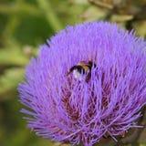bumblebee Στοκ εικόνα με δικαίωμα ελεύθερης χρήσης