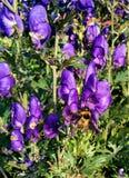 Bumblebee 2 zdjęcia stock