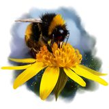 Bumblebee on a flower. Watercolor drawing Royalty Free Stock Photos