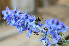 Bumblebee on a flower Stock Photo