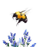Bumblebee Flying Over Blue Flowers Watercolor Illustration Hand Drawn. Hand drawn Watercolor Summer illustration of Bumblebee  Flying Over Blue Flowers isolated Stock Photography