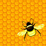 Bumblebee and honeycombs Royalty Free Stock Image