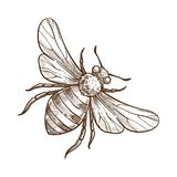 Bumblebee insect monochrome sketch outline white vector illustration. Bumblebee insect monochrome sketch outline realistic natural creature with wings and vector illustration