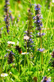 Bumblebee lata w ogródzie między kwiatami w świetle słonecznym Zdjęcie Royalty Free
