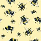 Bumblebee na żółtym tle banki target2394_1_ kwiatonośnego rzecznego drzew akwareli cewienie Insekt sztuka handwork bezszwowy wzor Obrazy Stock
