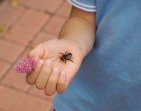 Bumblebee na palmie chłopiec troszkę Obraz Stock