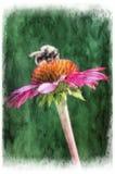 Bumblebee obsiadanie na purpurowym słoneczniku abstrakcjonistycznego tła składu daemon ciemna cyfrowa fantazi potwora obrazu kwad Obraz Stock