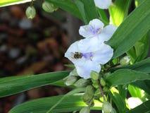 Bumblebee preservation. Beautiful flower garden stock photography