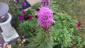 Bumblebee przyjęcie zdjęcia royalty free