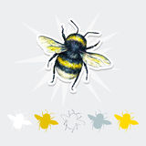Bumblebee rysunek Insekt sztuki set handwork Odgórny widok Fotografia Royalty Free