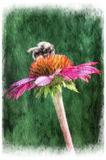 Bumblebee sitting on a purple sunflower. Digital painting Stock Image