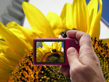 Bumblebee on a sunflower in camera viewfinder. Bumblebee on a sunflower in camera lens viewfinder Royalty Free Stock Photos