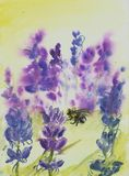 Bumblebee. Watercolor painting of a lavender field and a bumblebee Royalty Free Stock Photography