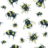 Bumblebee on a white background. Watercolor drawing. Insects art. Handwork. Seamless pattern Royalty Free Stock Photography