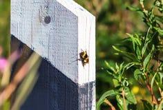 Bumblebee On Wooden Milestones Stock Images