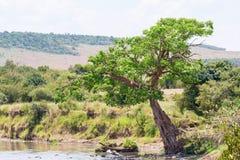 Bäume auf der Flussbank Stockbild