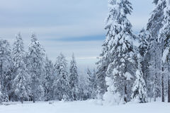 Bäume darunter des Schnees Lizenzfreie Stockbilder