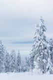 Bäume darunter des Schnees Stockbild