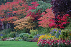 Bäume in den Butchart Gärten Lizenzfreies Stockfoto