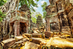 Bäume, die unter Ruinen von Tempel Preah Khan in altem Angkor wachsen Stockbilder