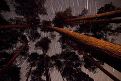 Bäume in einem Wald mit Sternspuren Lizenzfreie Stockfotografie
