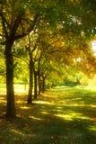 Bäume in einer Reihe Stockfotos