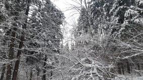 Bäume im Schnee im Winter stock footage